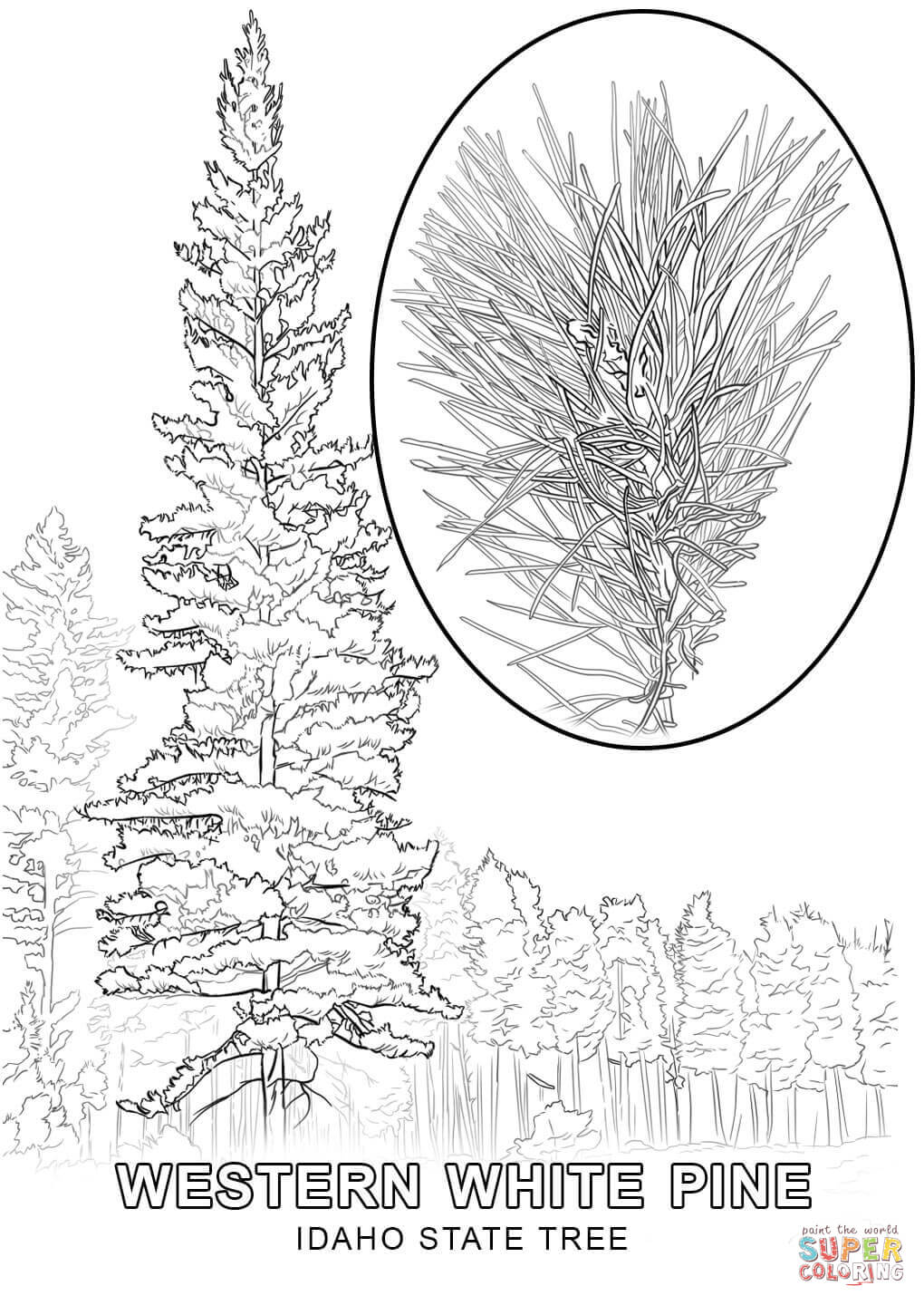 Idaho State Tree Coloring Page