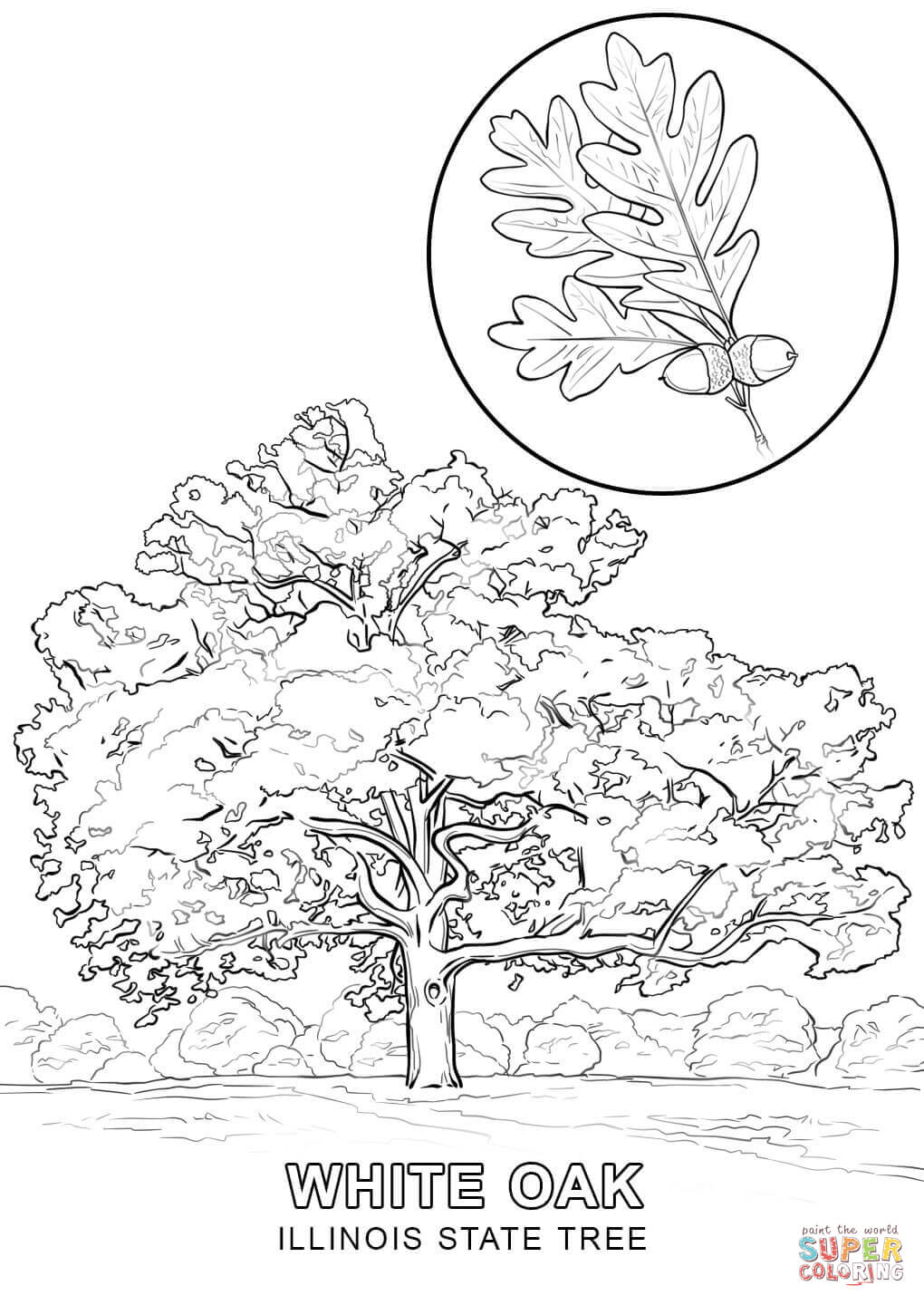 Illinois State Tree Coloring Page