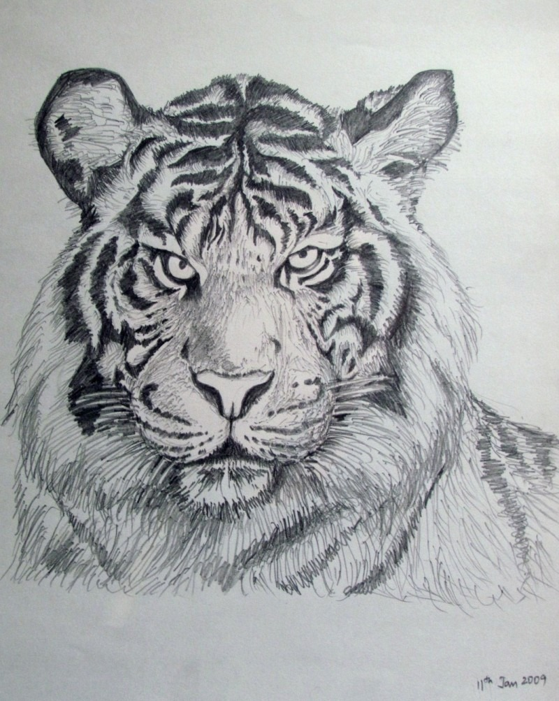 Bengal Tiger By Artist Rajendra V
