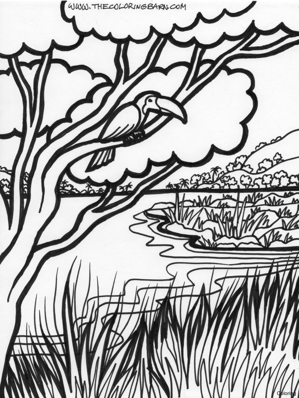 Coloring Pages ~ Instructive Tropical Rainforest Coloring Page