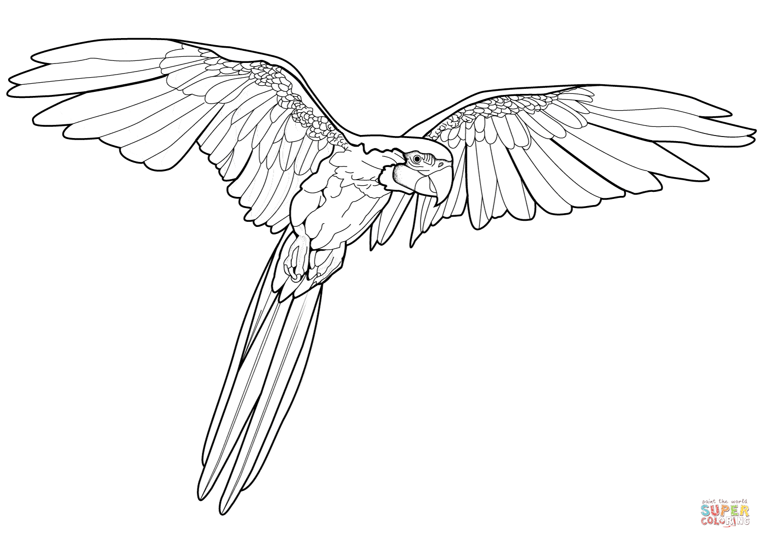 Macaw Pictures To Color – Printable Coloring Page For Kids