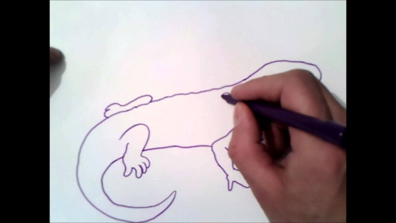 How To Draw A Salamander Step By Step