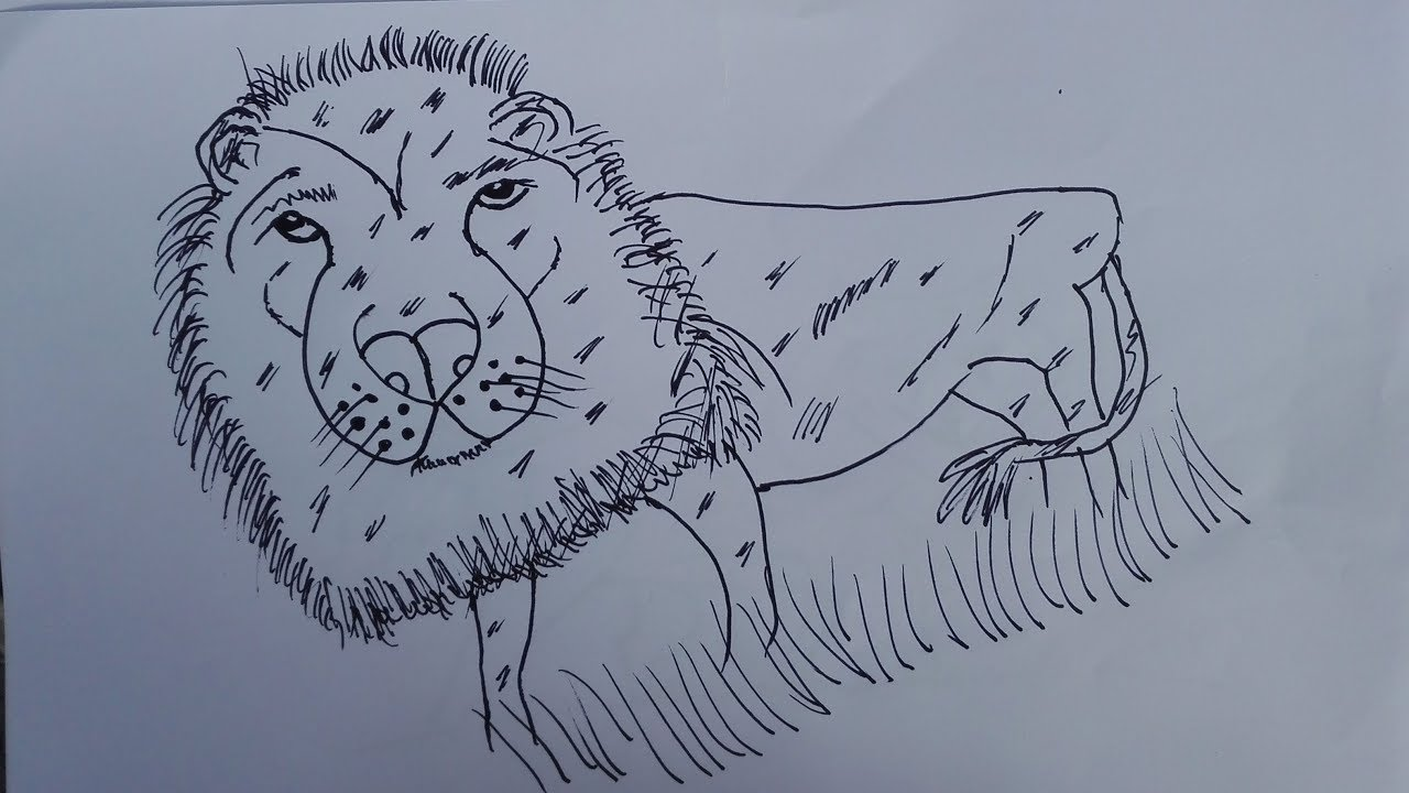 How To Draw A Royal Bengal Tiger