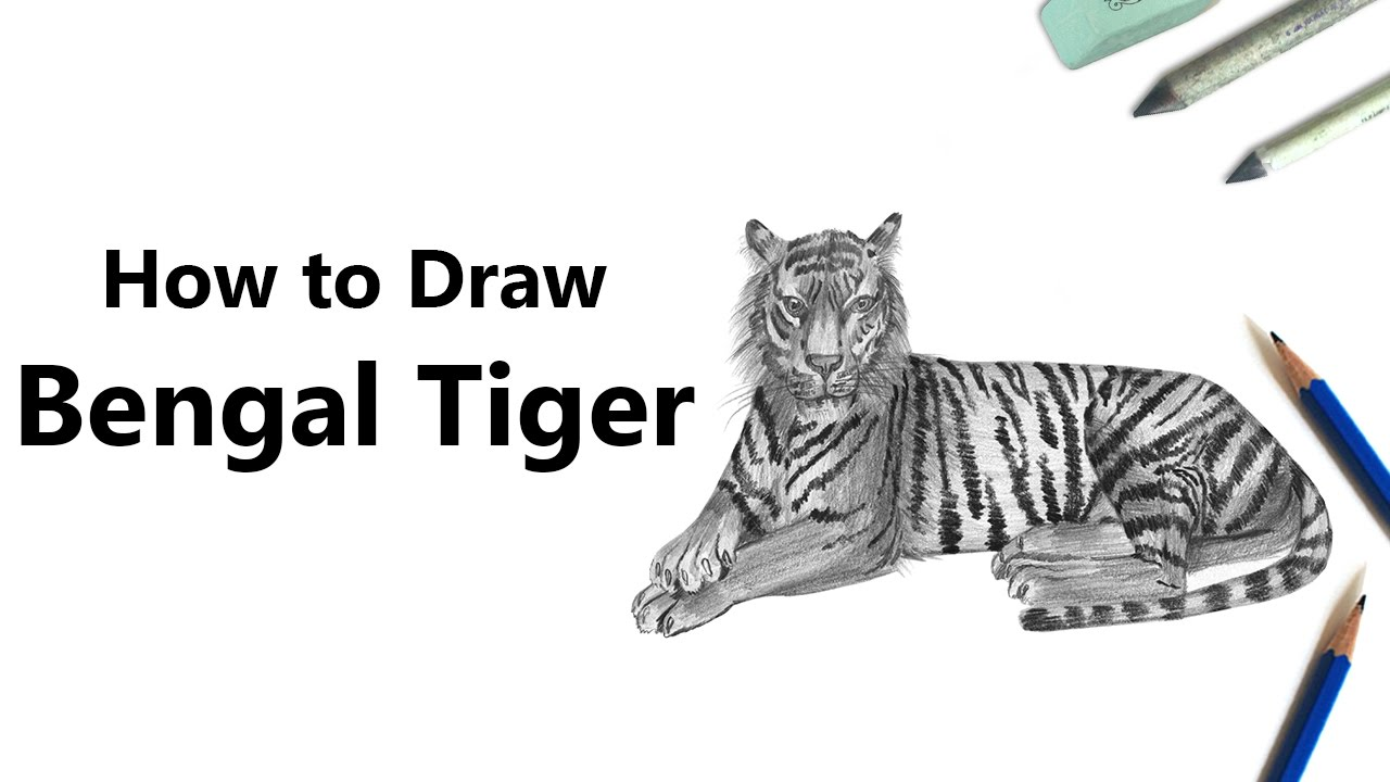 How To Draw A Bengal Tiger With Pencils [time Lapse]