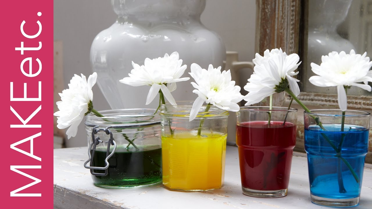 Kids' Science Experiment