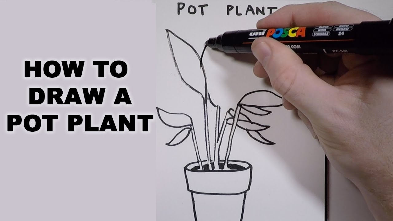 How To Draw A Pot Plant