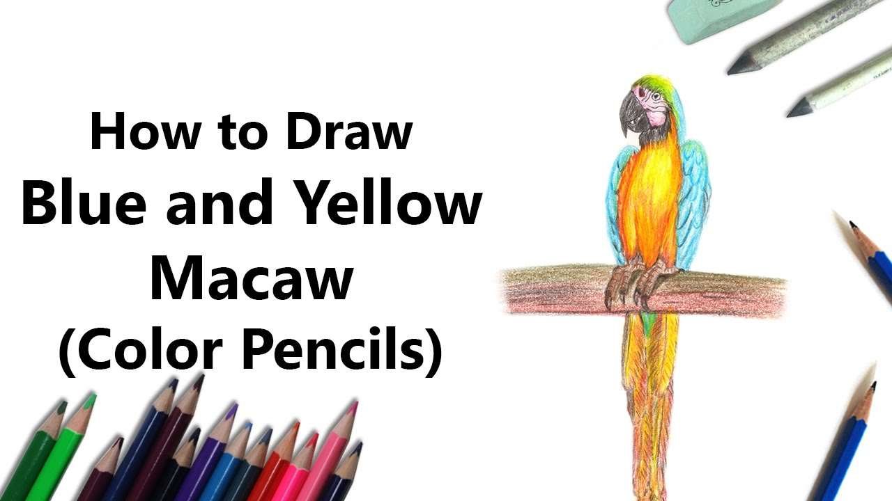 How To Draw A Blue And Yellow Macaw With Color Pencils [time Lapse