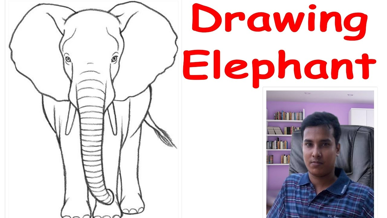 How To Draw An Elephant Front