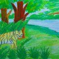 Bengal Tiger Drawing