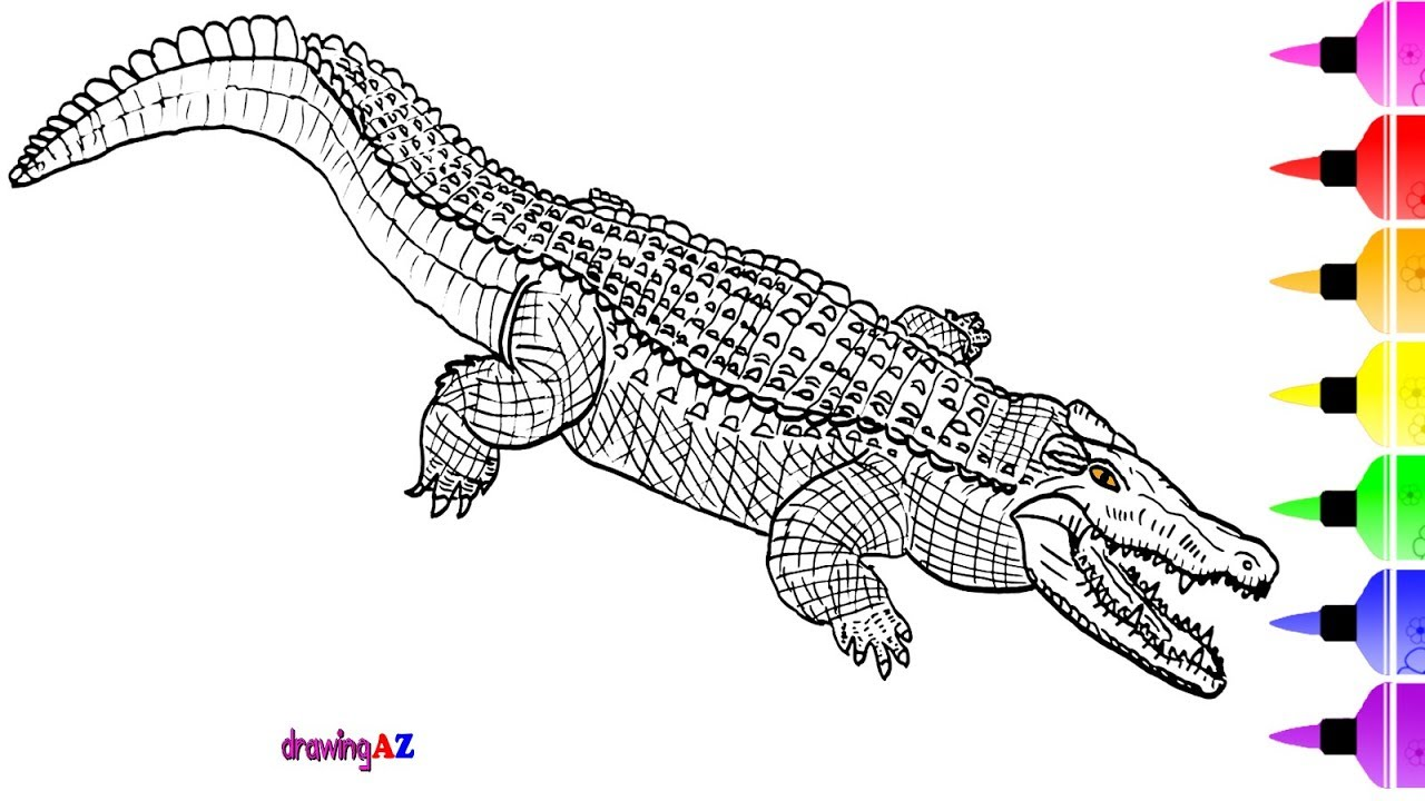Crocodile Drawing And Coloring Pages For Kids Learn To Draw