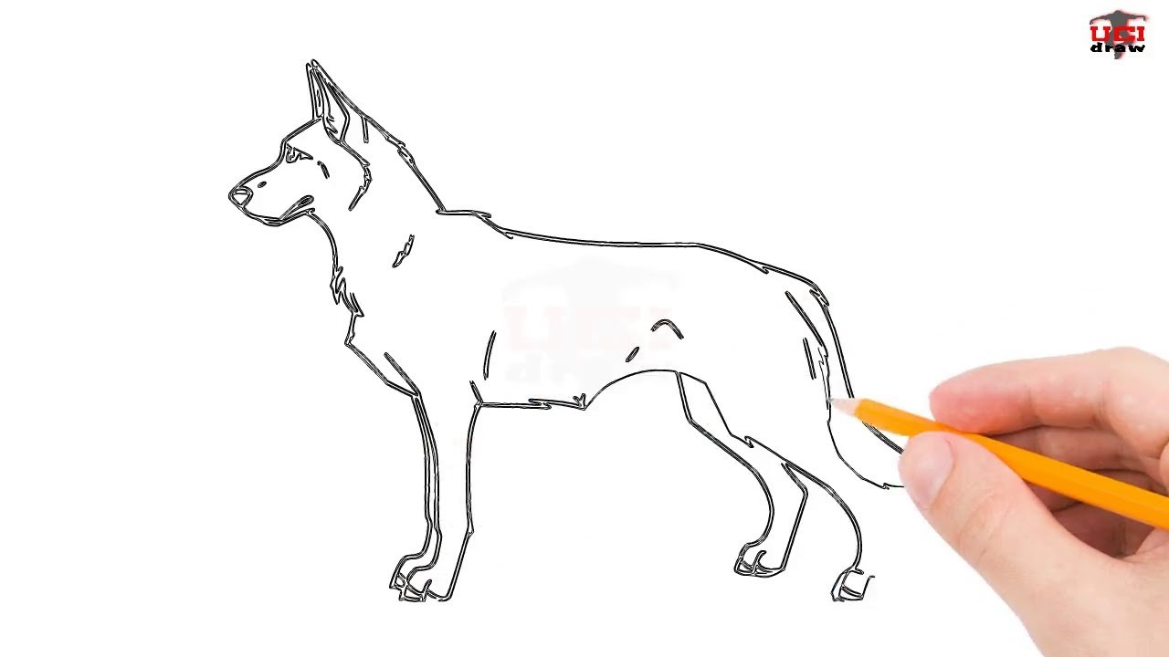 How To Draw A German Shepherd Step By Step Easy For Beginners