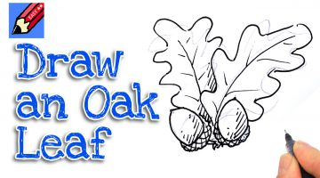 Oak Leaf Sketch