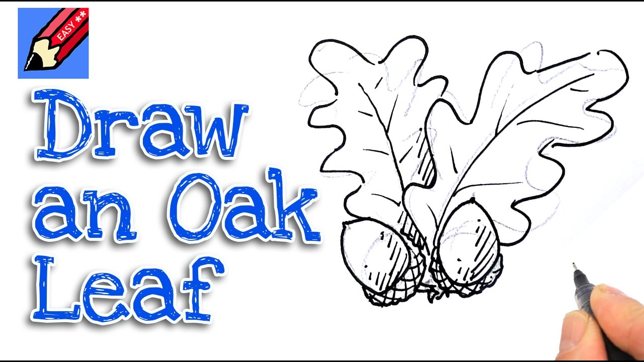 Learn How To Draw Acorns And Oak Leaves Real Easy For Kids And