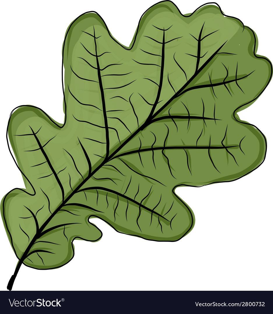 Oak Leaf Green Sketch For Your Design Royalty Free Vector