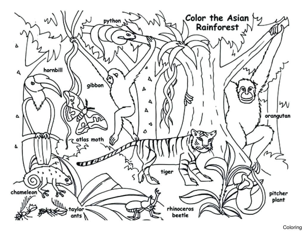 Coloring Pages ~ Coloring Pages Pics Of Tropical Rainforest