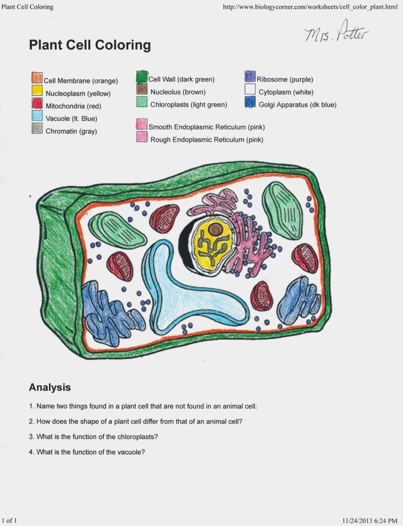 Plant Cell Coloring Answers
