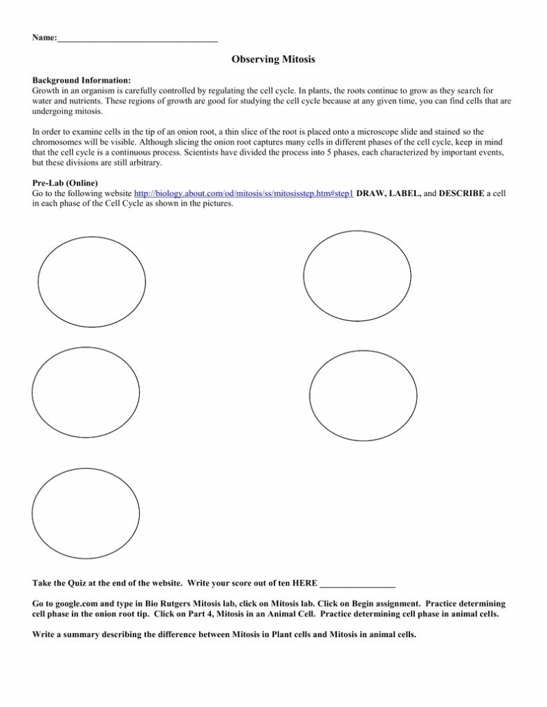 Plant Cell Coloring Worksheet Answers