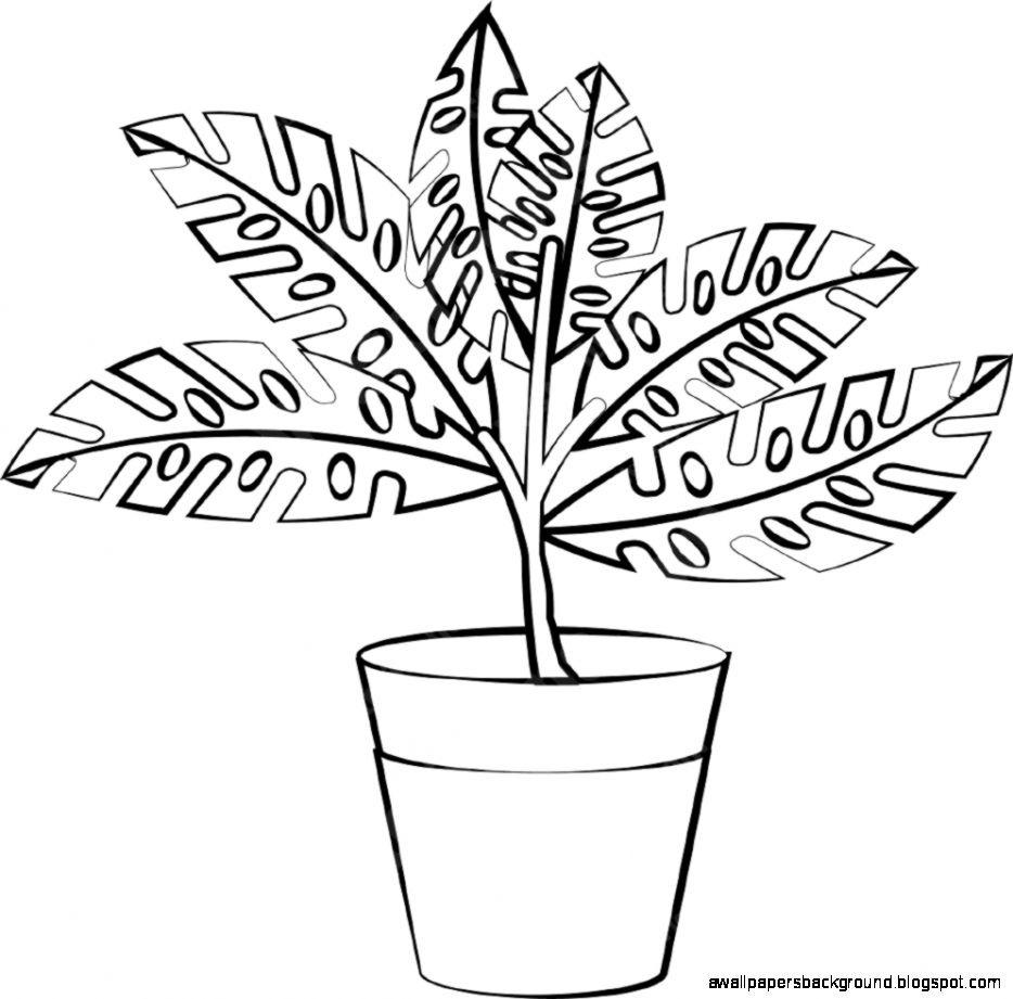 Plant Pot Sketch At Paintingvalley Com