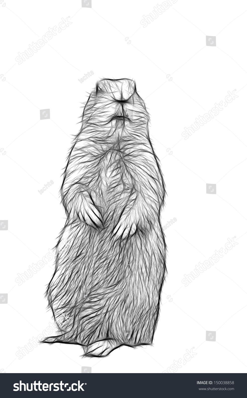 Prairie Dog Illustration Pencil Stock Illustration 150038858