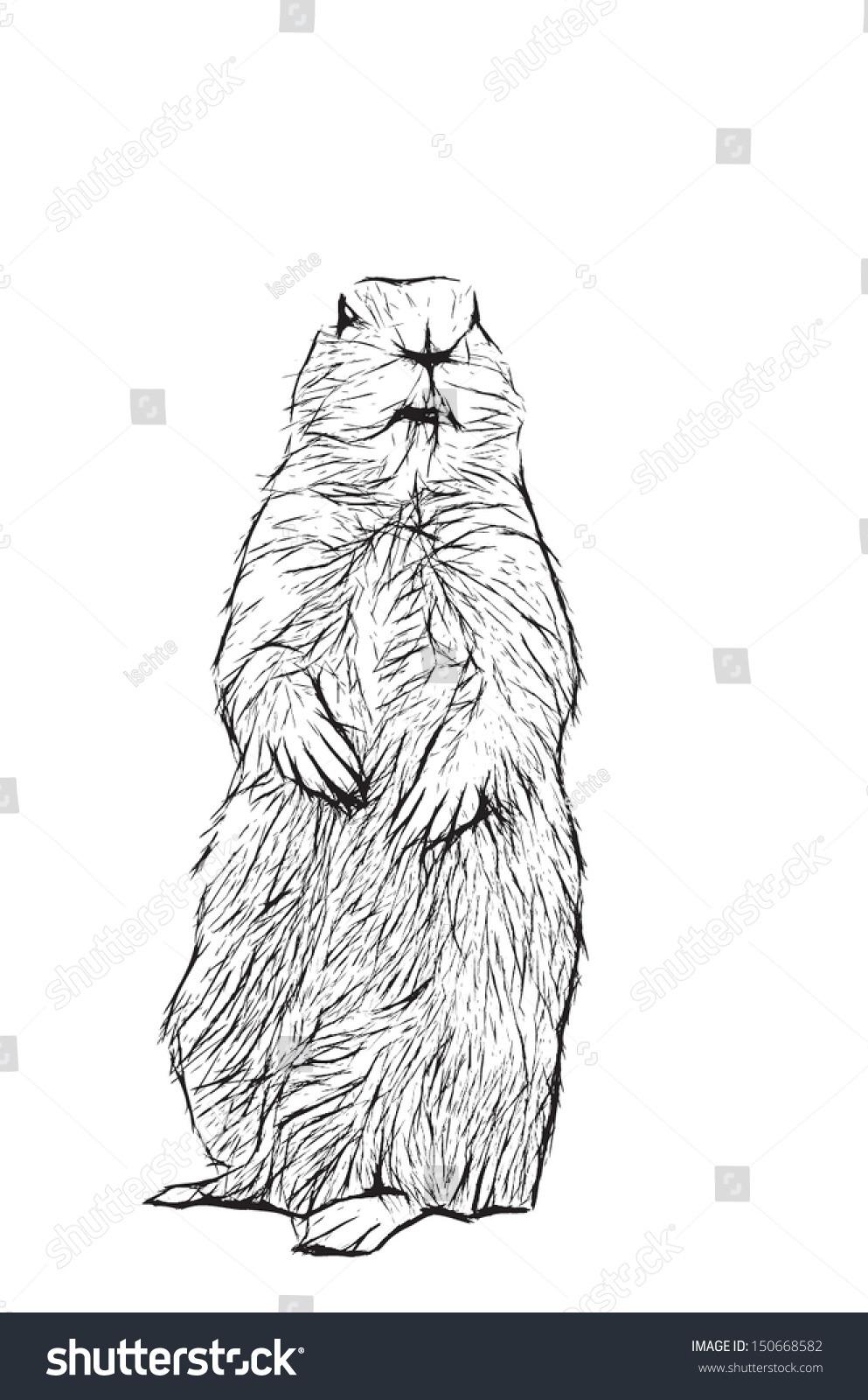 Prairie Dog Eps Vector Stock Vector (royalty Free) 150668582