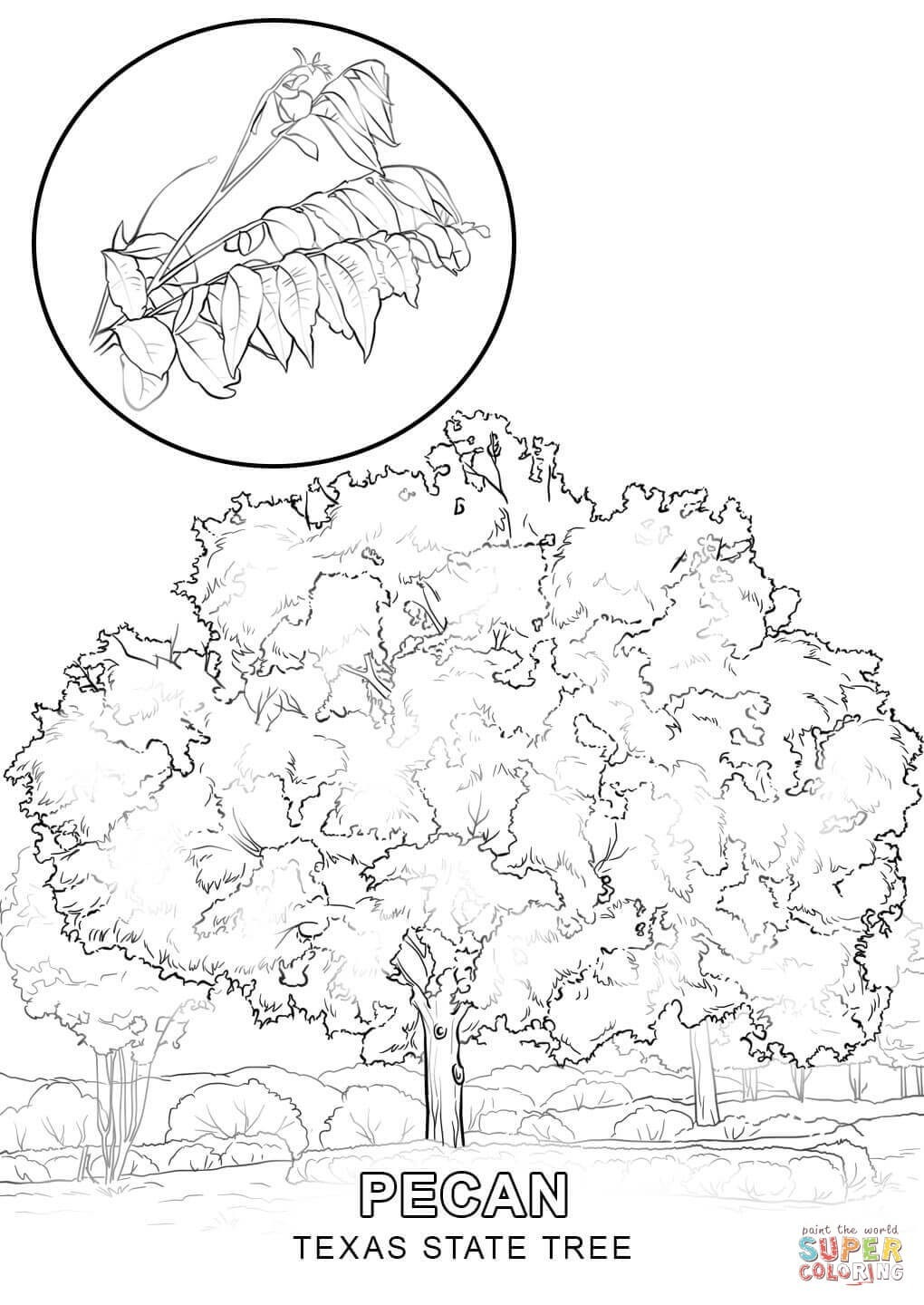Part 517 Zootopia Judy Hopps Coloring Pages