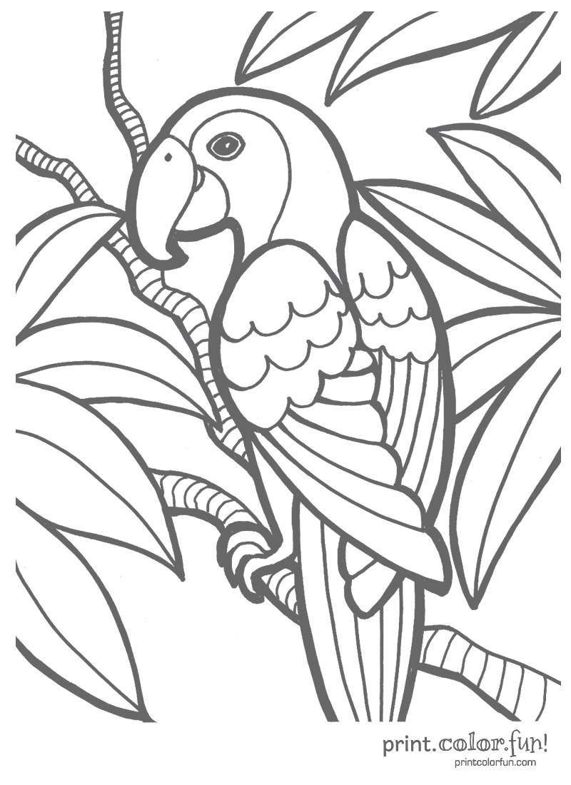 Tropical Coloring Pages