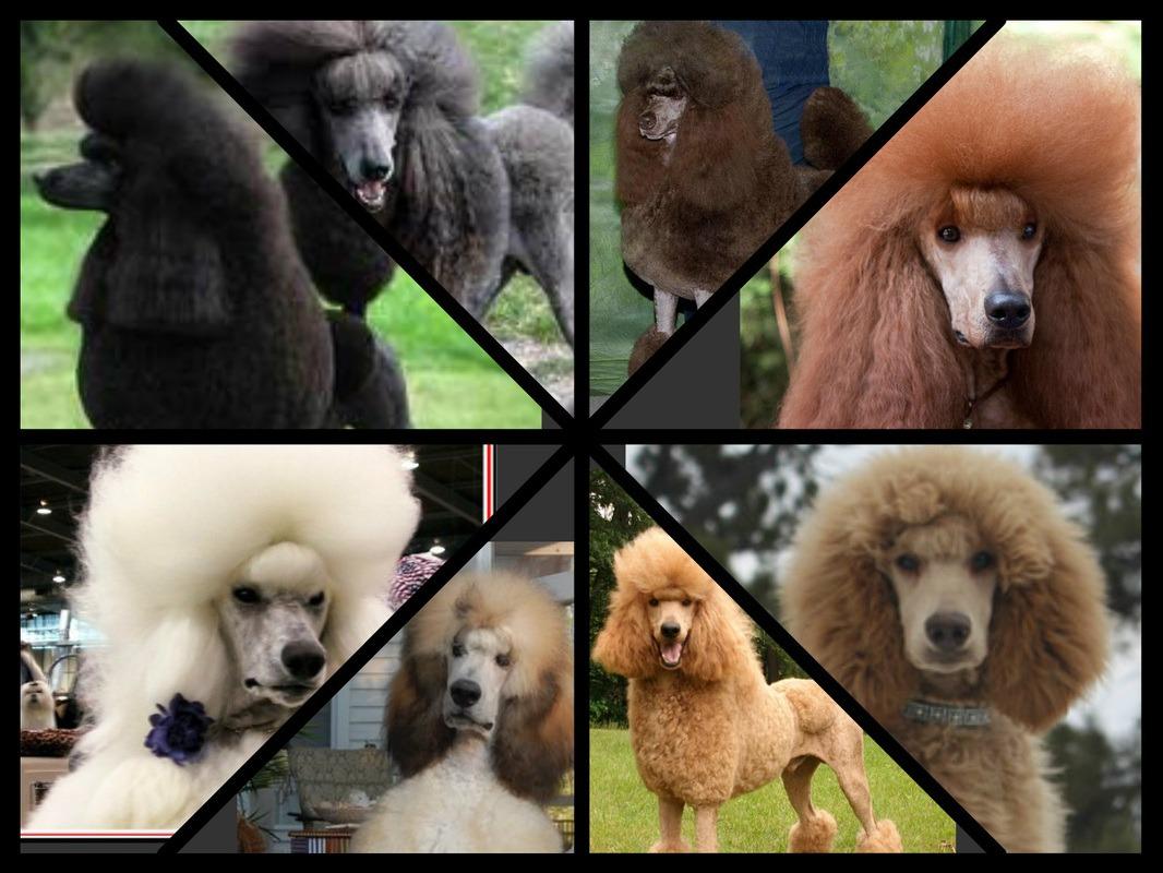 Genetics Behind Coat Color