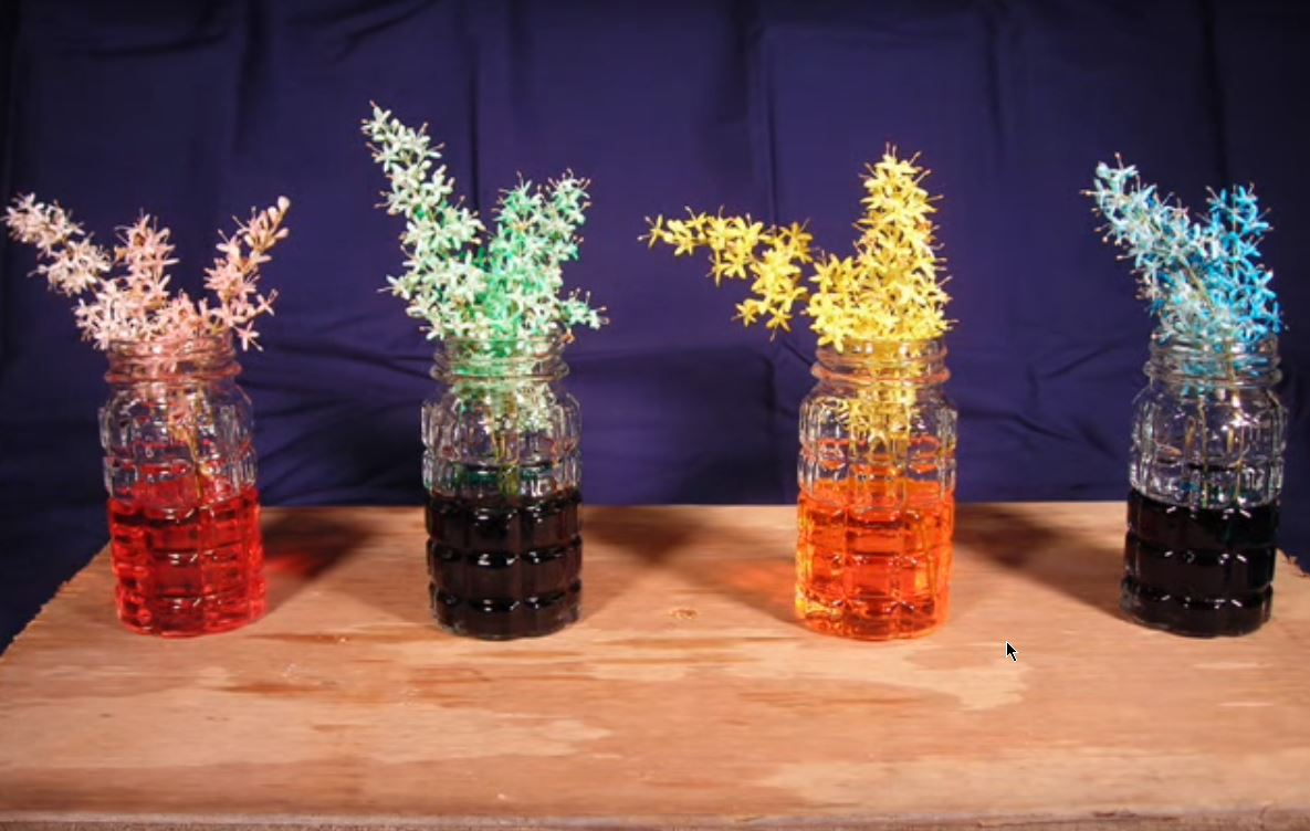 Food Coloring Experiment