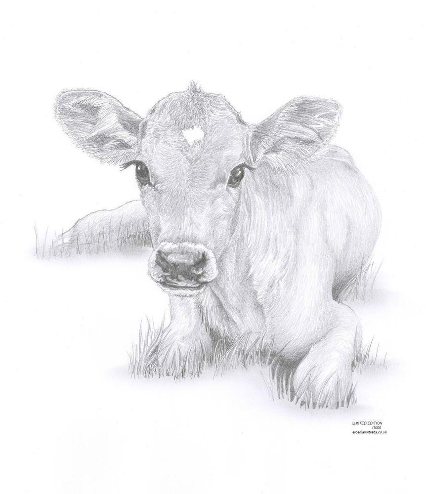 Cow Calf Baby Art Pencil Drawing Invitation