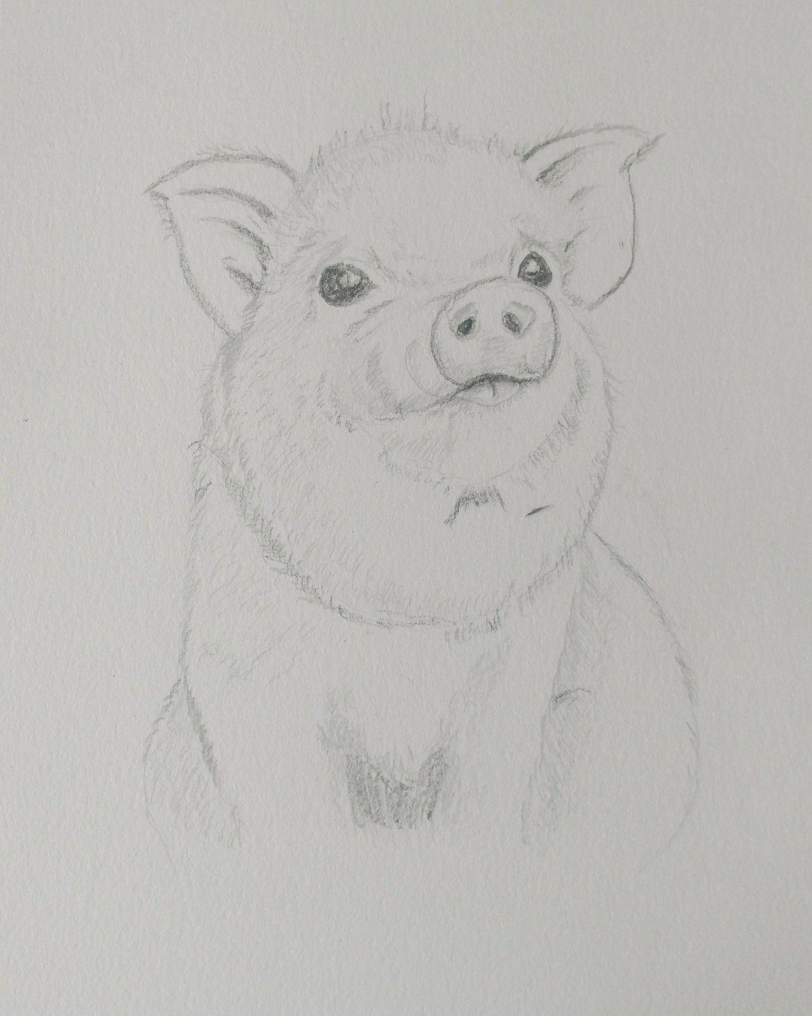 Baby Pig  Pencil In My Sketchbook