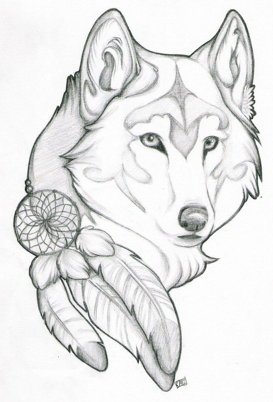Lobo Con Plumas De Tocada De Cacique  Más Cerca Del Concepto Para