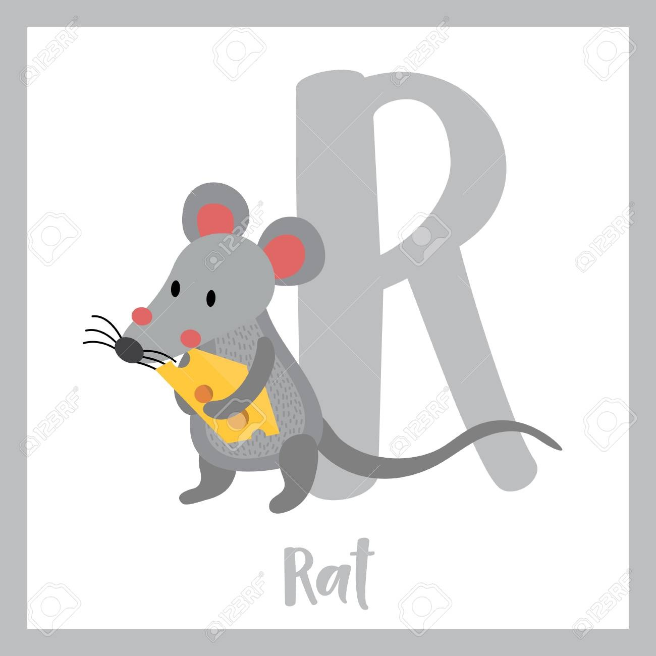 R Letter Vocabulary  Rat Holding Cheese  Cute Children Abc Zoo