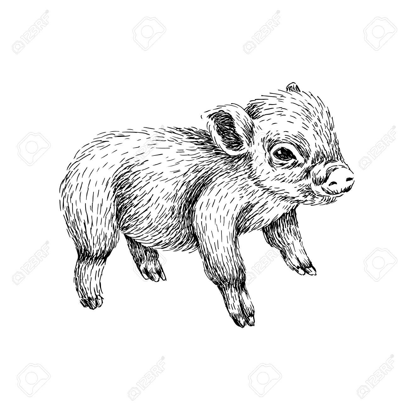 Baby Farm Animal  Domestic Little Pig  Hand Drawn Sketch Line