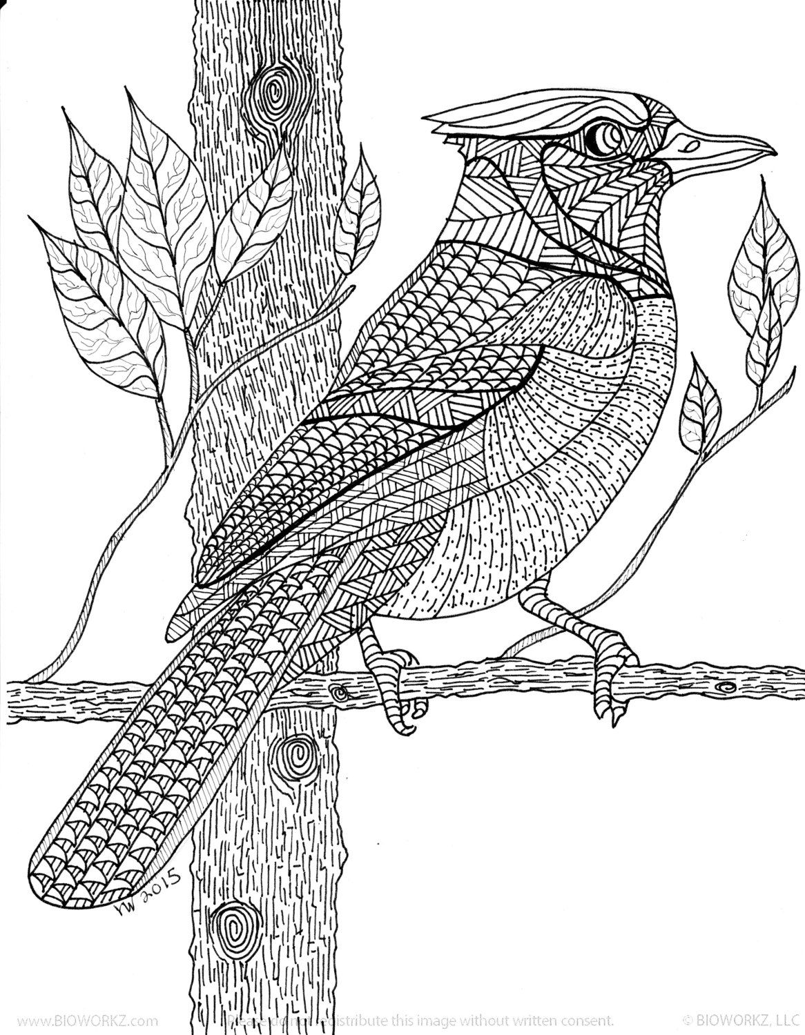 Blue Jay Zentangle Coloring Page By Inspirationbyvicki On ...