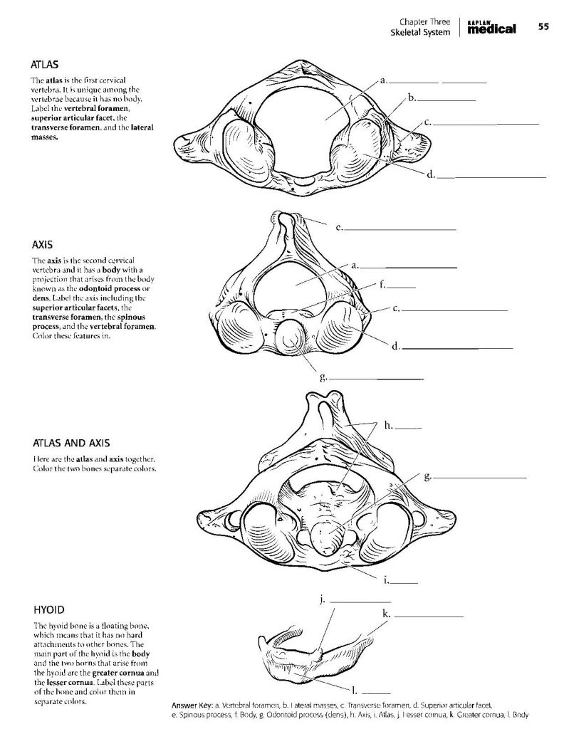 Anatomy Coloring Book Pages Awesome Free Anatomy Coloring Pages