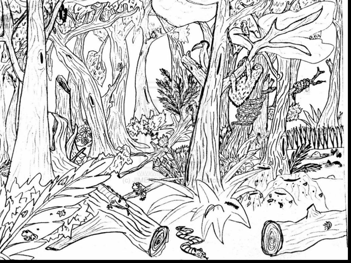 12 Forest Drawing Wealth For Free Download On Ayoqq Org