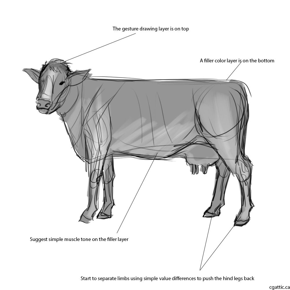 Realistic Cow Drawings In 4 Steps With Photoshop