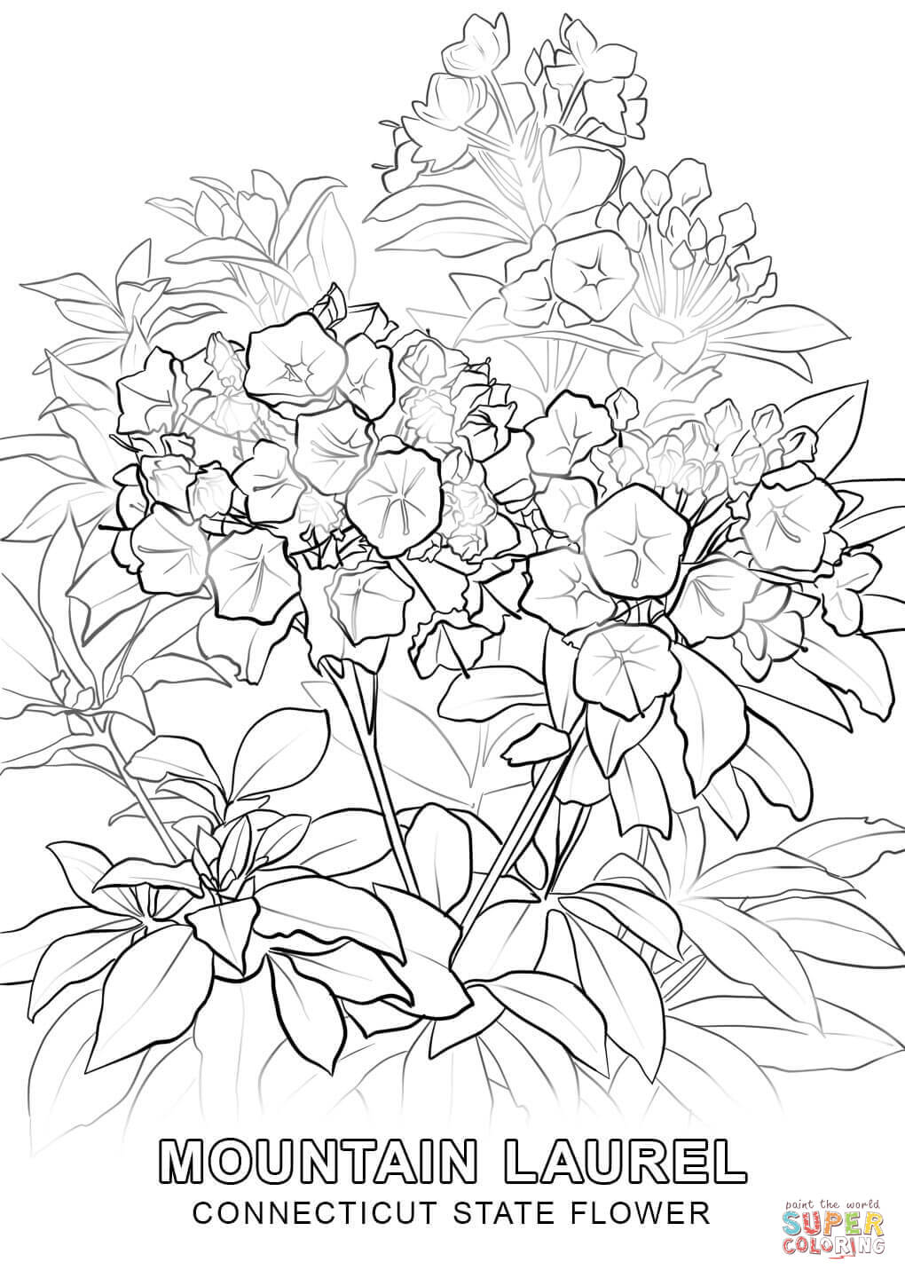Connecticut State Flower Coloring Page – Color Bros