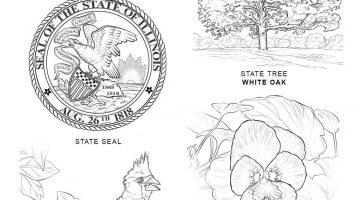 Connecticut State Flower Coloring Pages