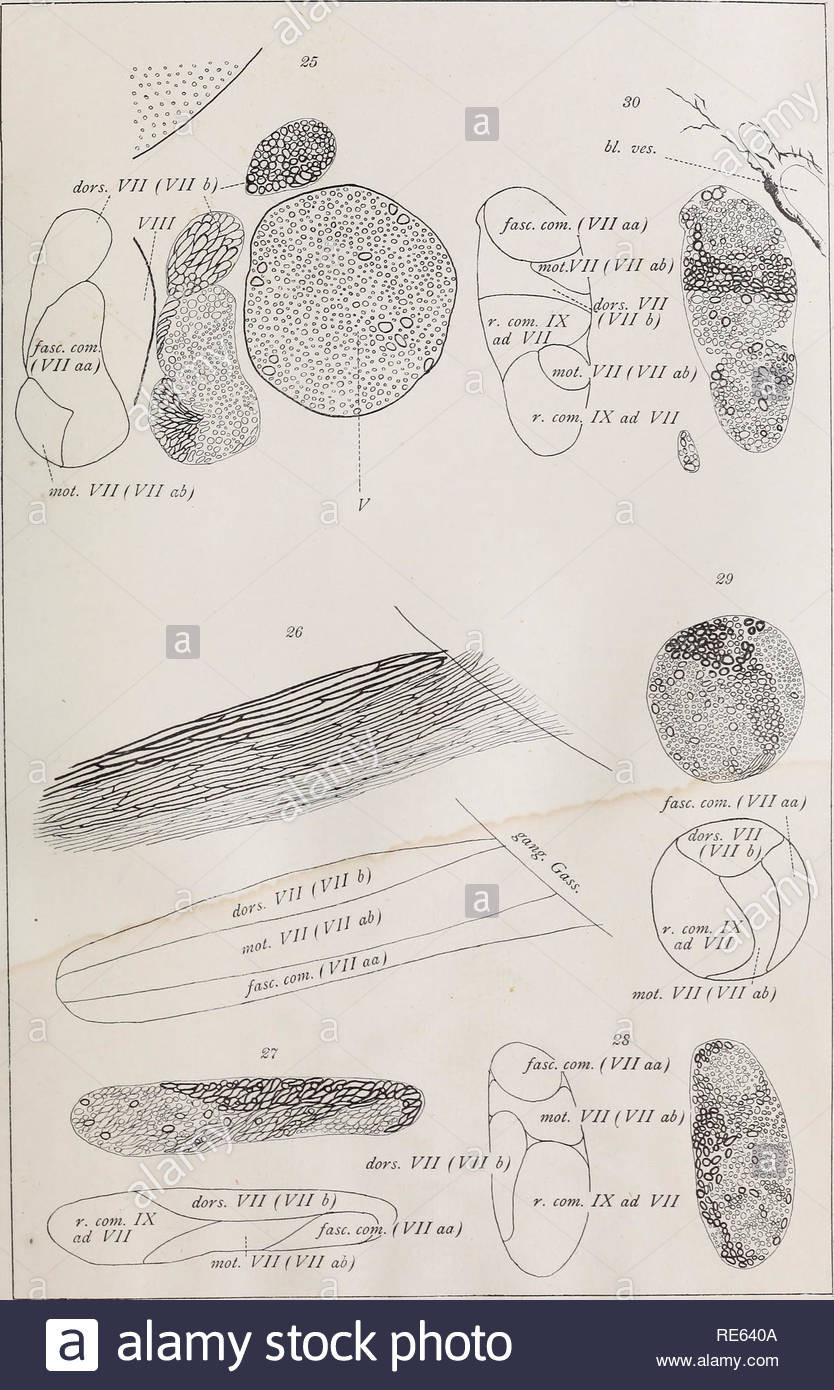 Beautiful Cranial Nerves Coloring Sheet – Viranculture Org