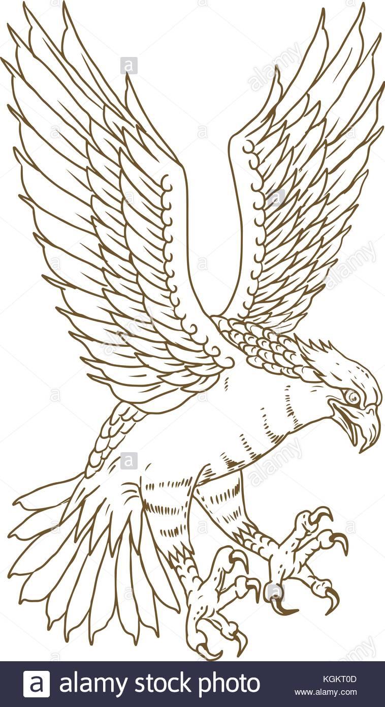 Drawing Sketch Style Illustration Of Osprey, Sea Hawk, River Hawk