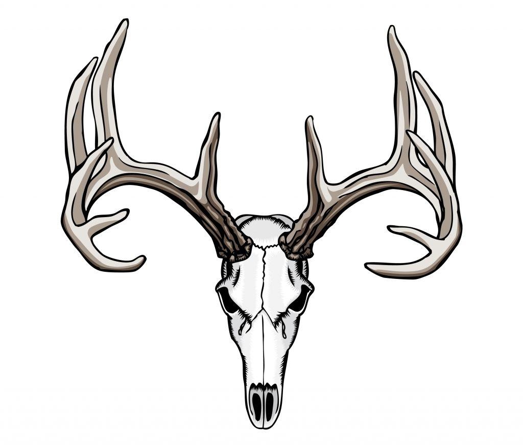 Tribal Deer Antler Tattoos 1000 Ideas About Deer Skull Tattoos On