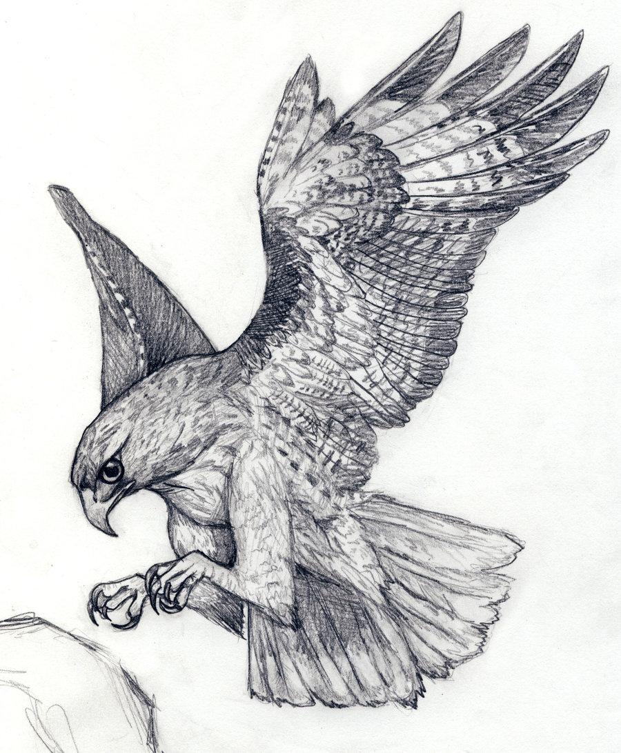 Flying Hawk Drawing Tattoo