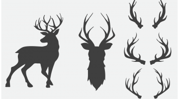 Deer Antlers Drawing