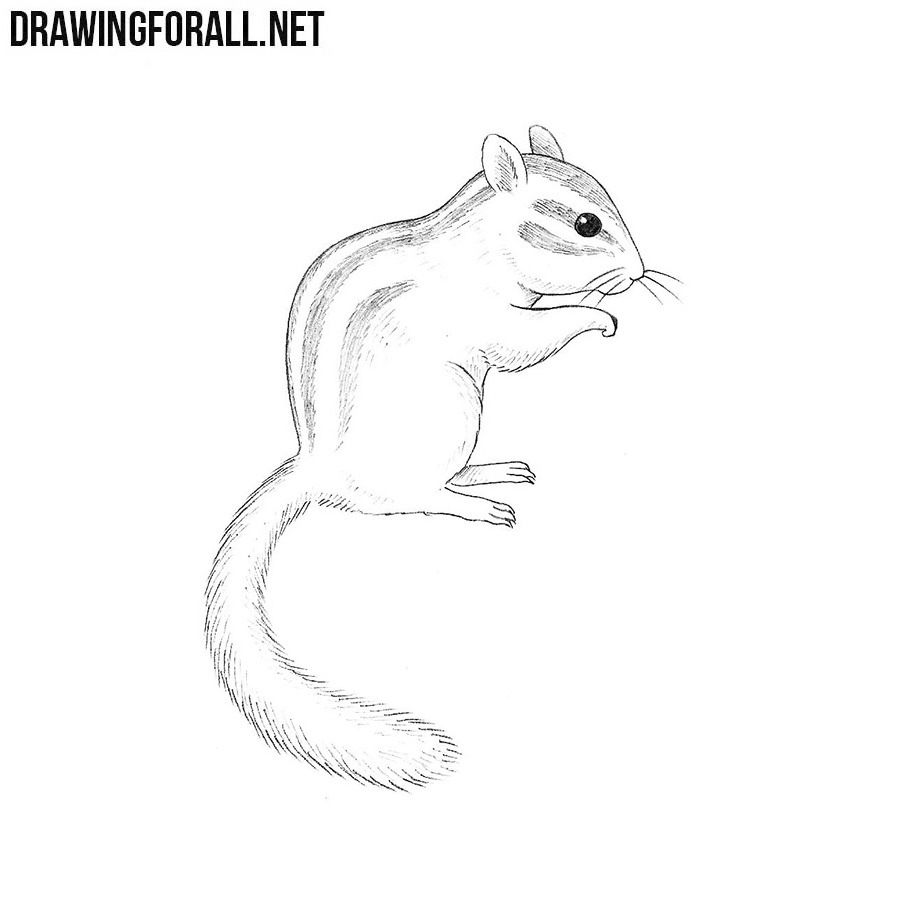 How To Draw A Chipmunk