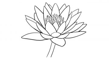 How To Draw A Water Lily