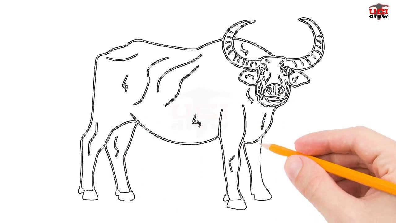 How To Draw A Buffalo Step By Step Easy For Beginners Kids