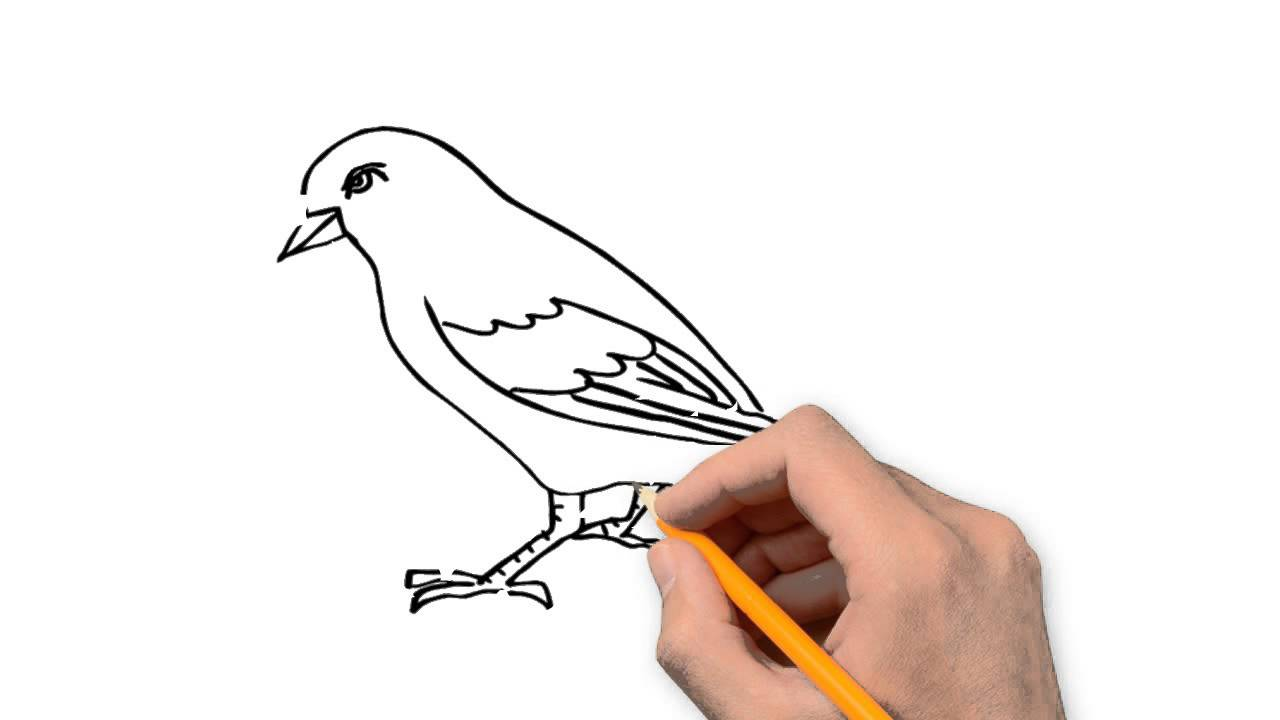Sparrow Animals Pencil To Draw Step By Step