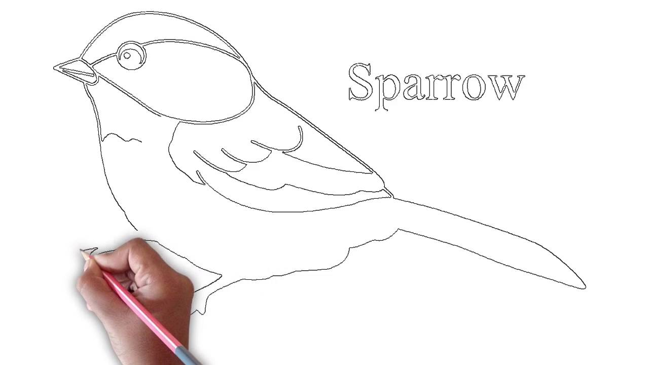 Drawing Sparrow