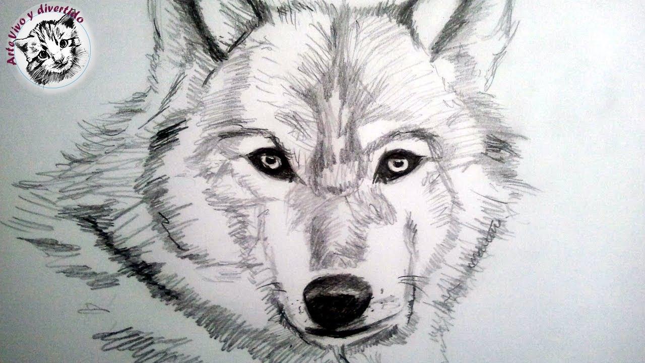 Como Dibujar Un Lobo A Lapiz, Paso A Paso  Como Dibujar Animales
